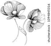 vector poppy. floral botanical... | Shutterstock .eps vector #1094845316