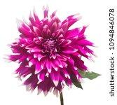 dahlia flower in several colors ...   Shutterstock . vector #1094846078