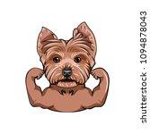 yorkshire terrier dog. muscles. ... | Shutterstock .eps vector #1094878043