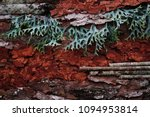 mix tree bark texture  free...   Shutterstock . vector #1094953814