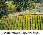 vineyard in the adelaide hills  ... | Shutterstock . vector #1094976923