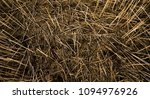 closeup of dead grass in a field | Shutterstock . vector #1094976926