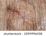 Texture Of Tree Trunk. Vintage...