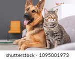 Stock photo adorable cat and dog resting together on sofa indoors animal friendship 1095001973