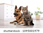 Stock photo adorable cat and dog resting together at home animal friendship 1095001979