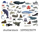 Various Cute Sea Animals...