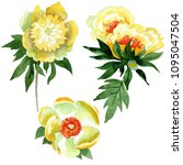 yellow peony. floral botanical...   Shutterstock . vector #1095047504