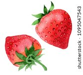red strawberries healthy food... | Shutterstock . vector #1095047543