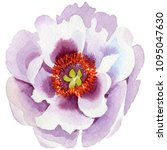 gently pink peonies. floral... | Shutterstock . vector #1095047630