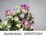 beautiful gerbera l.  transvaal ... | Shutterstock . vector #1095071414