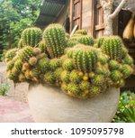 group of beautiful cactus... | Shutterstock . vector #1095095798