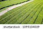 flight over tea plantation.... | Shutterstock . vector #1095104039
