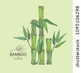 bamboo  bamboo stalk and leaves.... | Shutterstock .eps vector #1095106298