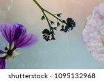 dry flowers details   Shutterstock . vector #1095132968