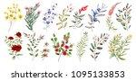 watercolor illustration.... | Shutterstock . vector #1095133853
