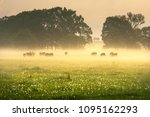 foggy morning on the sunny... | Shutterstock . vector #1095162293