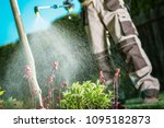 Gardener Fighting Insects in the Garden by Insecticide Whole Backyard Garden. - stock photo