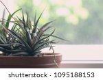 Succulent Havortia Stretched...