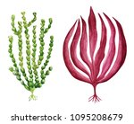 watercolor green and red sea... | Shutterstock . vector #1095208679
