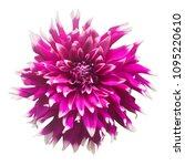 dahlia flower in several colors ...   Shutterstock . vector #1095220610