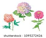 beautiful gentle flowers... | Shutterstock .eps vector #1095272426