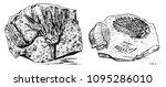 fragment fossils  skeleton of... | Shutterstock .eps vector #1095286010