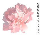 realistic peony flower on a... | Shutterstock .eps vector #1095303986