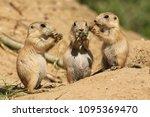 Three Little Prairie Dogs...