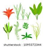 sea plants and aquatic marine... | Shutterstock .eps vector #1095372344