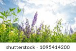 meadow in spring with flowers | Shutterstock . vector #1095414200