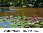 aquatic plants are plants that... | Shutterstock . vector #1095453068
