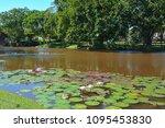 aquatic plants are plants that... | Shutterstock . vector #1095453830