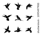 colibri set. vector | Shutterstock .eps vector #1095497900