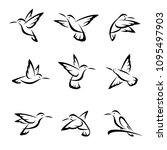 colibri set. vector | Shutterstock .eps vector #1095497903