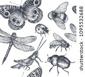 insects sketch decorative... | Shutterstock .eps vector #1095532688