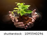 tree sprout and loose soil on...   Shutterstock . vector #1095540296