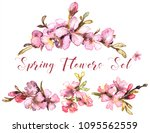 spring flowers watercolor.... | Shutterstock . vector #1095562559
