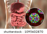 norovirus in human intestine ... | Shutterstock . vector #1095602870