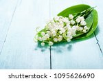 lily of the valley flowers...   Shutterstock . vector #1095626690