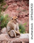 monkey sitting and watching on... | Shutterstock . vector #1095636920