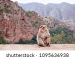 monkey sitting and watching on... | Shutterstock . vector #1095636938
