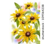 Yellow Daisy Flowers On White Background - stock photo