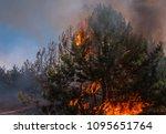 fire. wildfire  burning pine... | Shutterstock . vector #1095651764