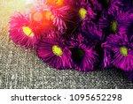 chrysanthemums  chamomile... | Shutterstock . vector #1095652298