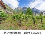 vineyard in liechtenstein.... | Shutterstock . vector #1095666296