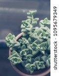 trendy succulent plants close... | Shutterstock . vector #1095679349