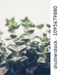 trendy succulent plants close... | Shutterstock . vector #1095679880
