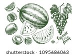 ink hand drawn set of fruits  ... | Shutterstock .eps vector #1095686063