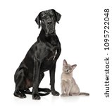 cat and dog together posing on... | Shutterstock . vector #1095722048