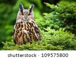 Stock photo eagle owl 109575800